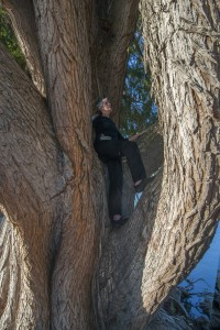 New Image sue in tree