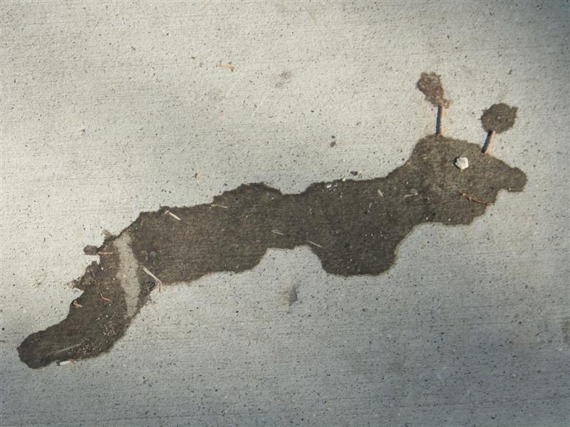 bird poop art 052 (Medium)