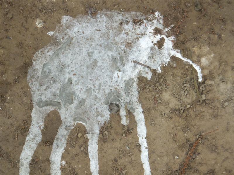 bird poop art 059 (Medium)
