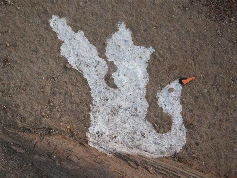bird poop art 079 (Medium)
