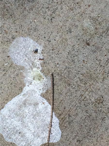 bird poop art 351 (Medium)