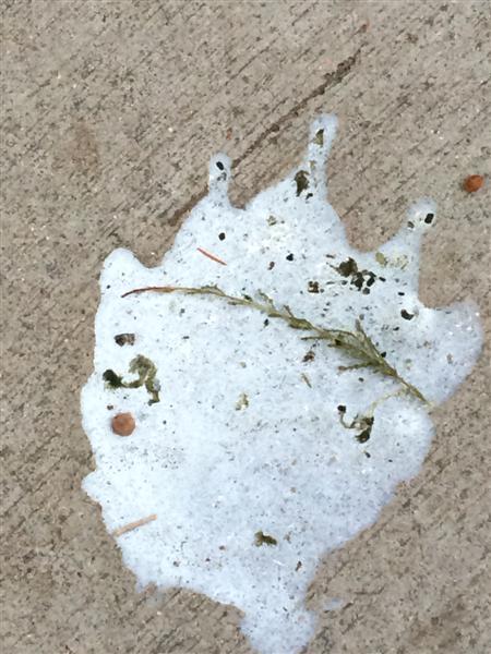 bird poop art 358 (Medium)